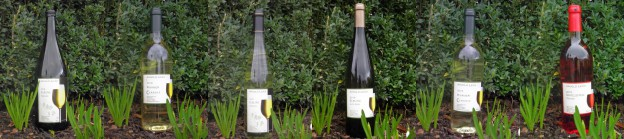 Trockene Weine - Weingut Arnold Leick